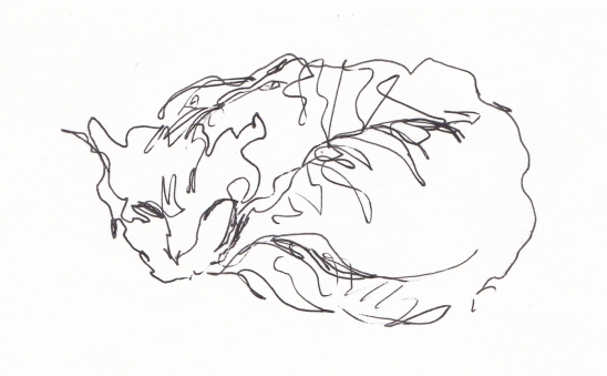 feline 1
