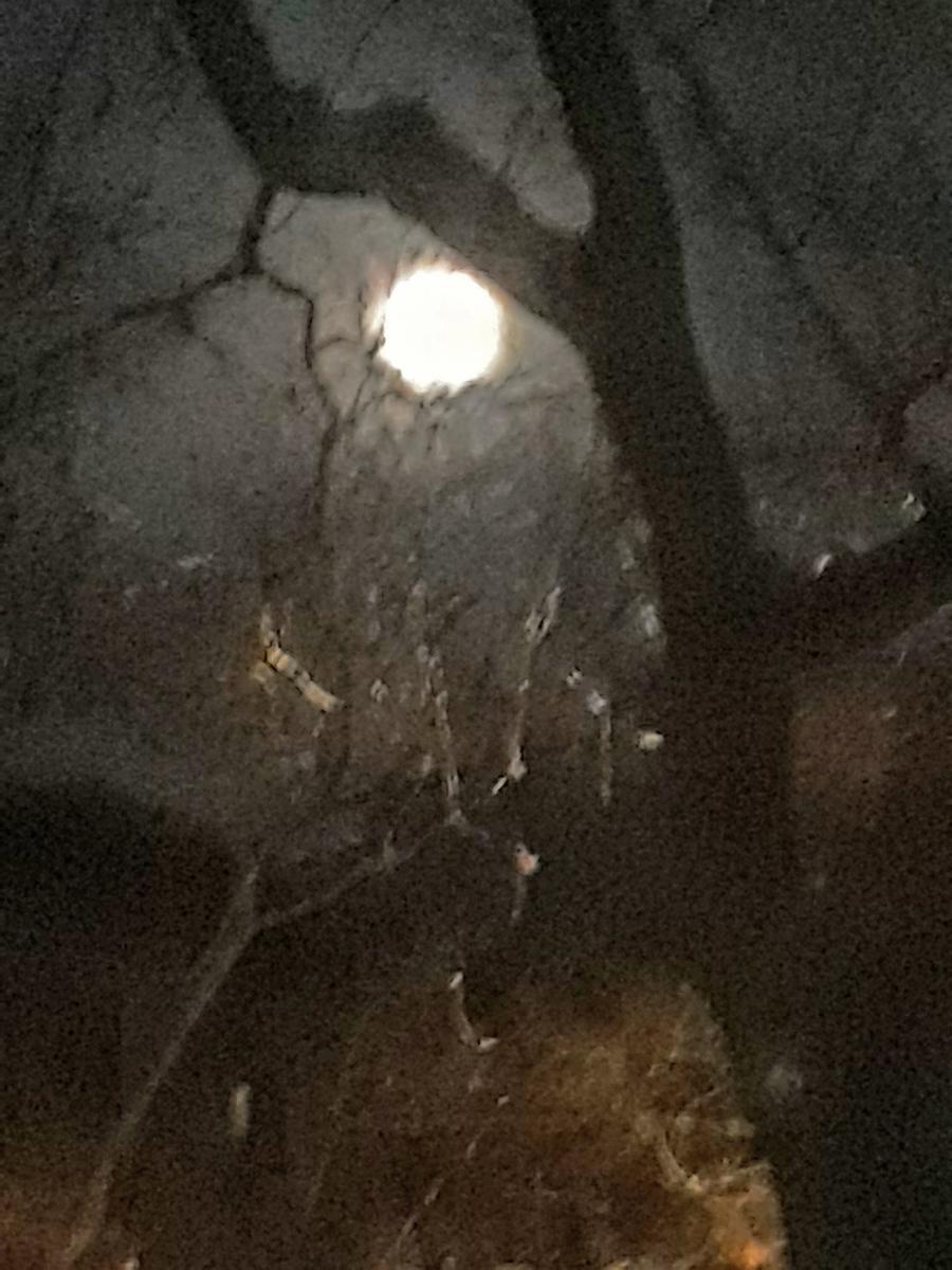 dec moon shadows s