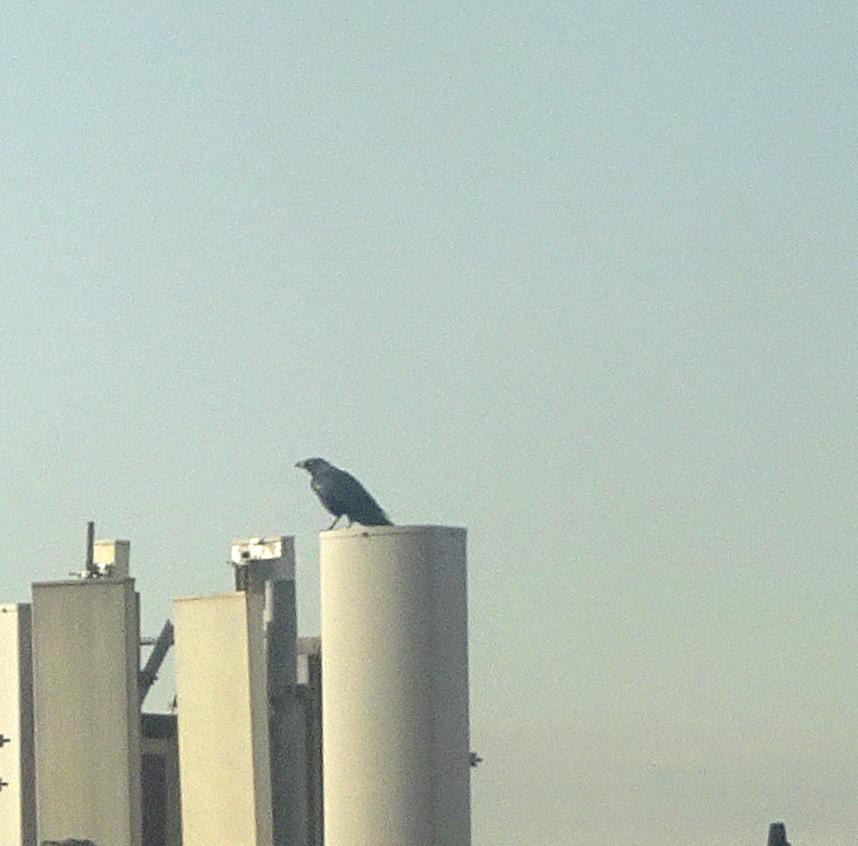 crow roof 3