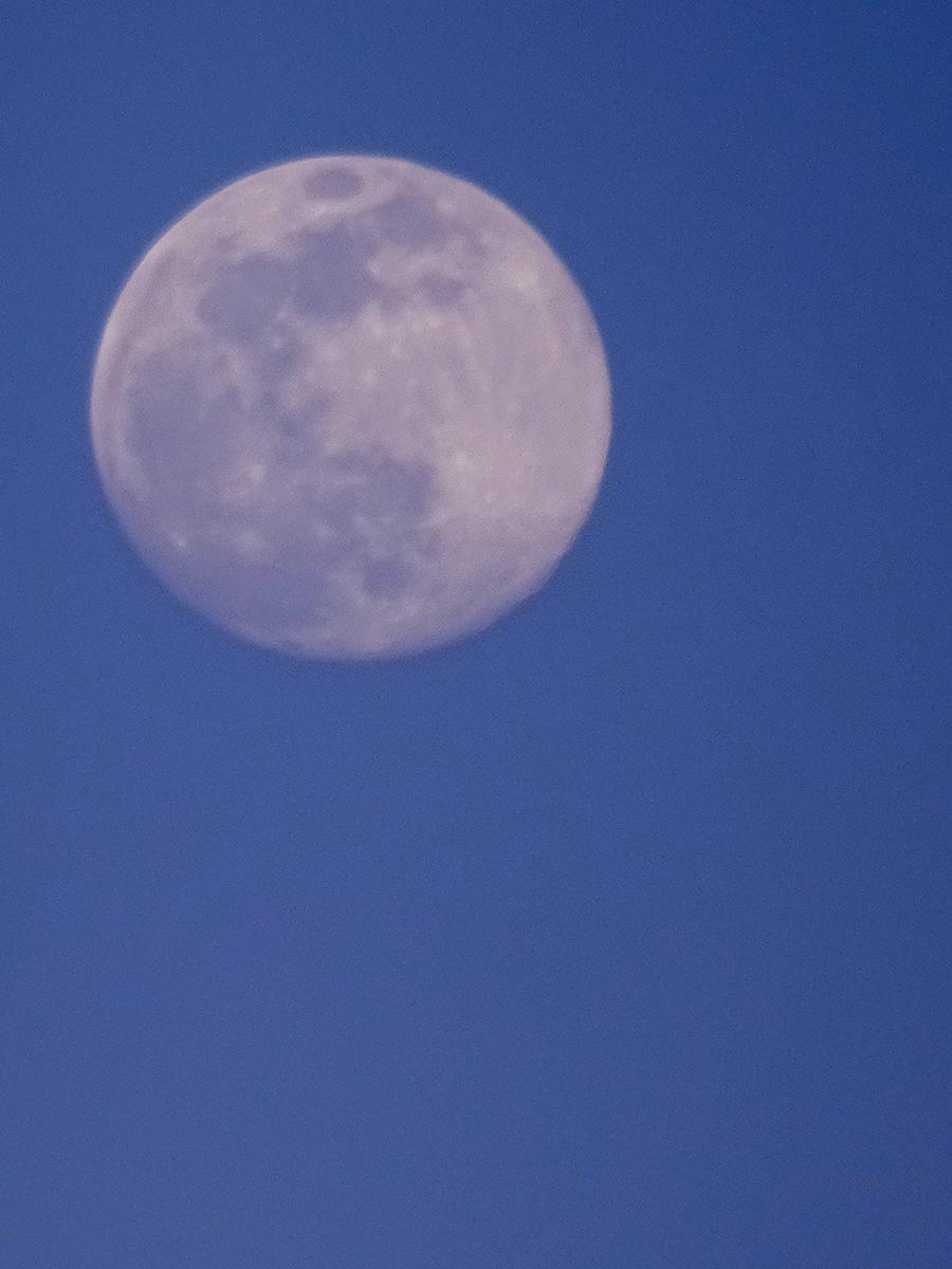 full lavendar moon s