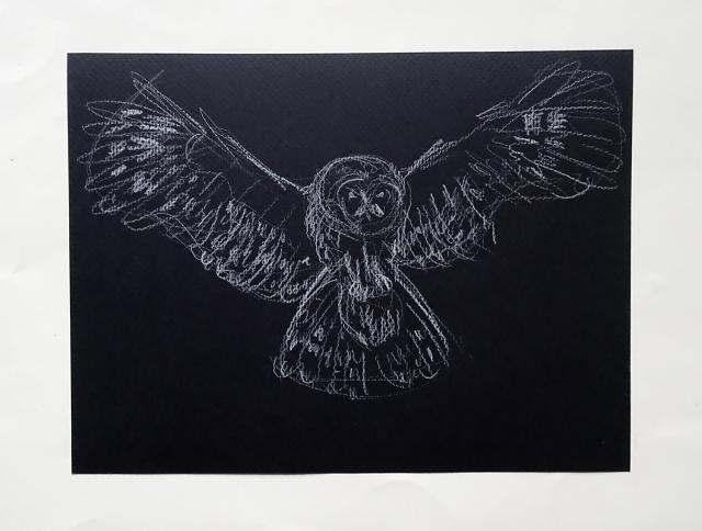owl 1s