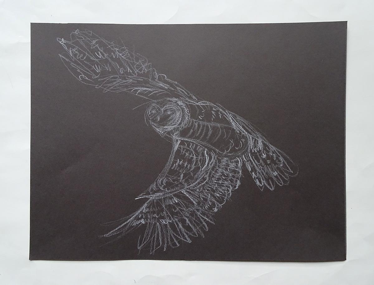 owl 2s