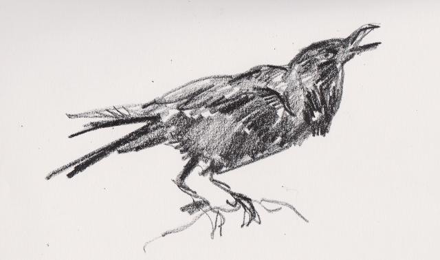 crow 3s