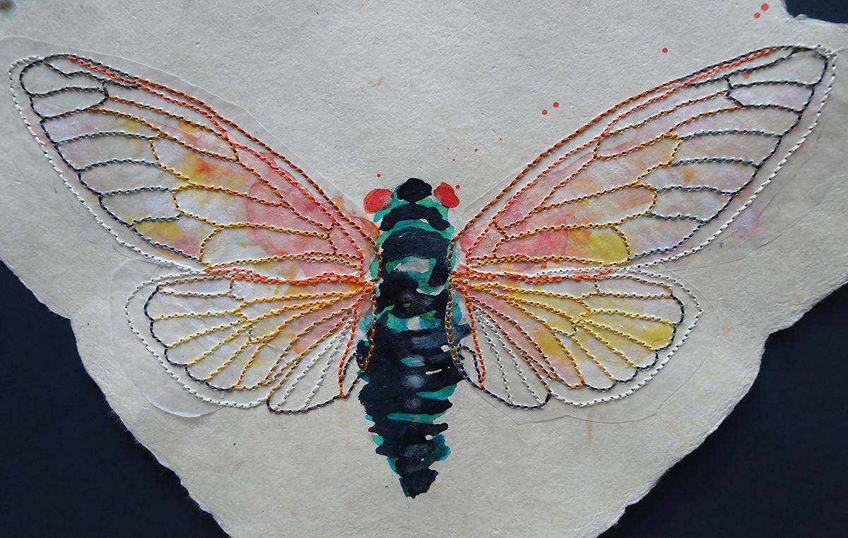 cicada close up 1s